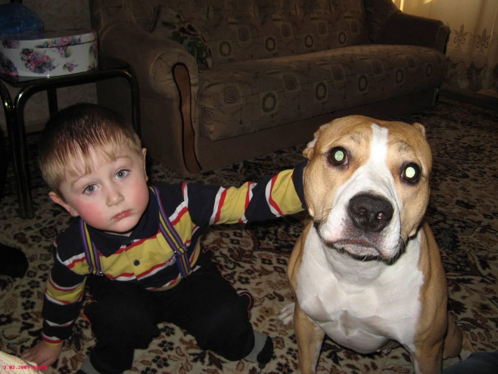 Фото дети и стаффордширские терьеры